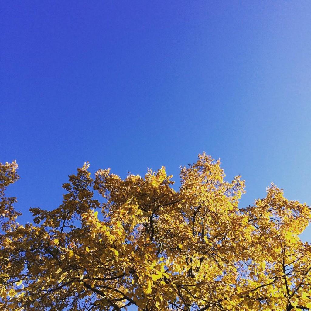 Les jolies couleurs d'automne ! Bonjour IG #cielbleu #bluesky #automne #autumn #troyes