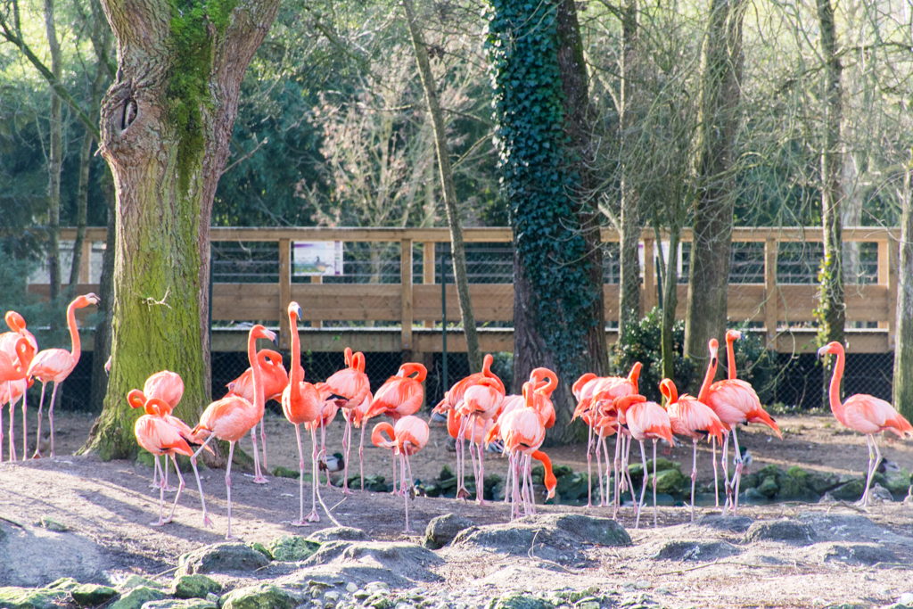 zoo beauval_1