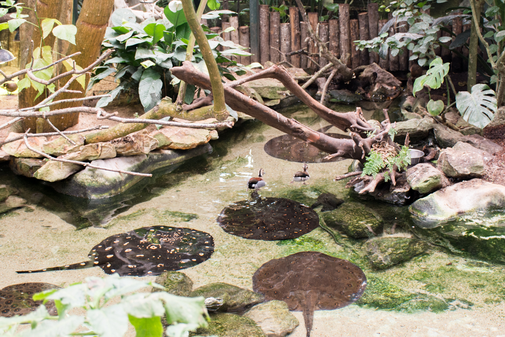zoo beauval_20