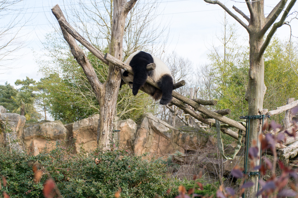 zoo beauval_28