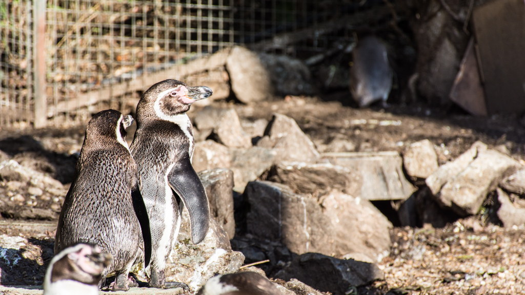 zoo beauval_3