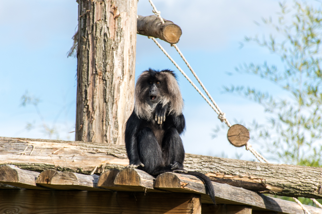 zoo beauval_30