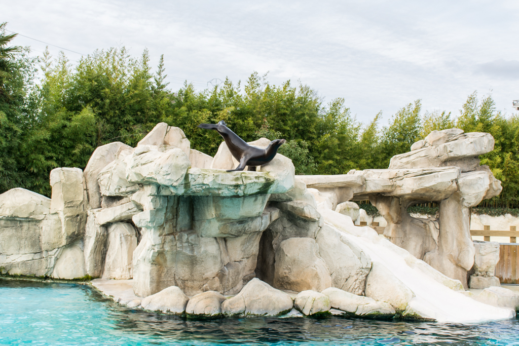 zoo beauval_32