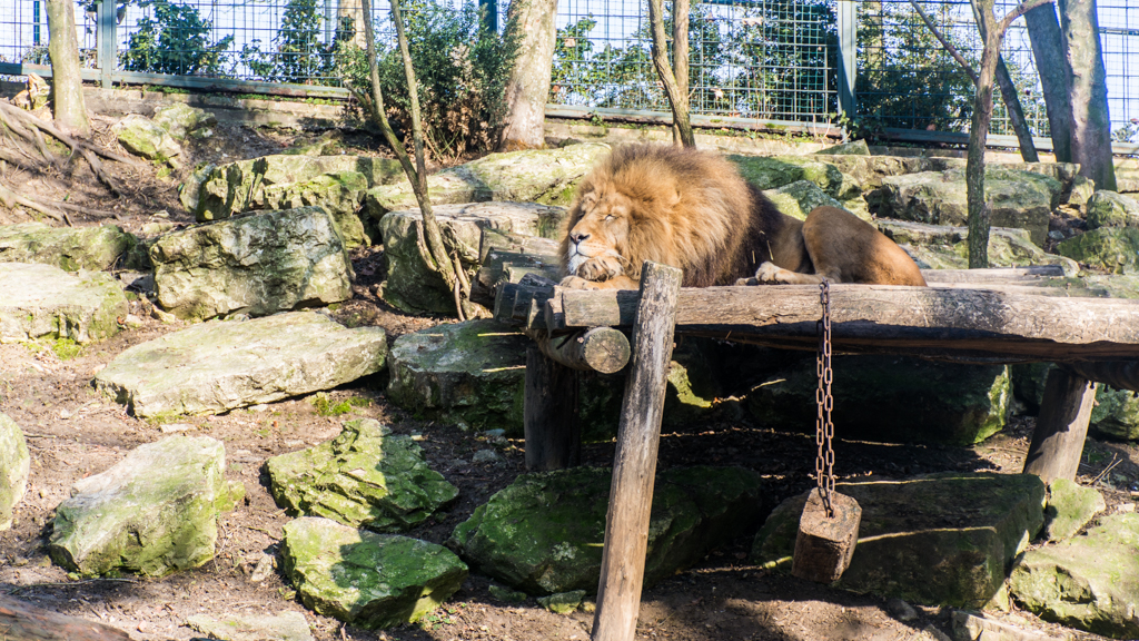 zoo beauval_7