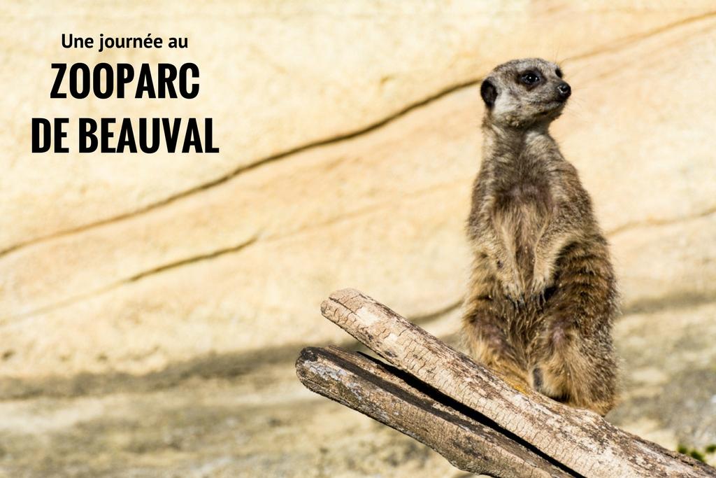 zoobeauval_suricate