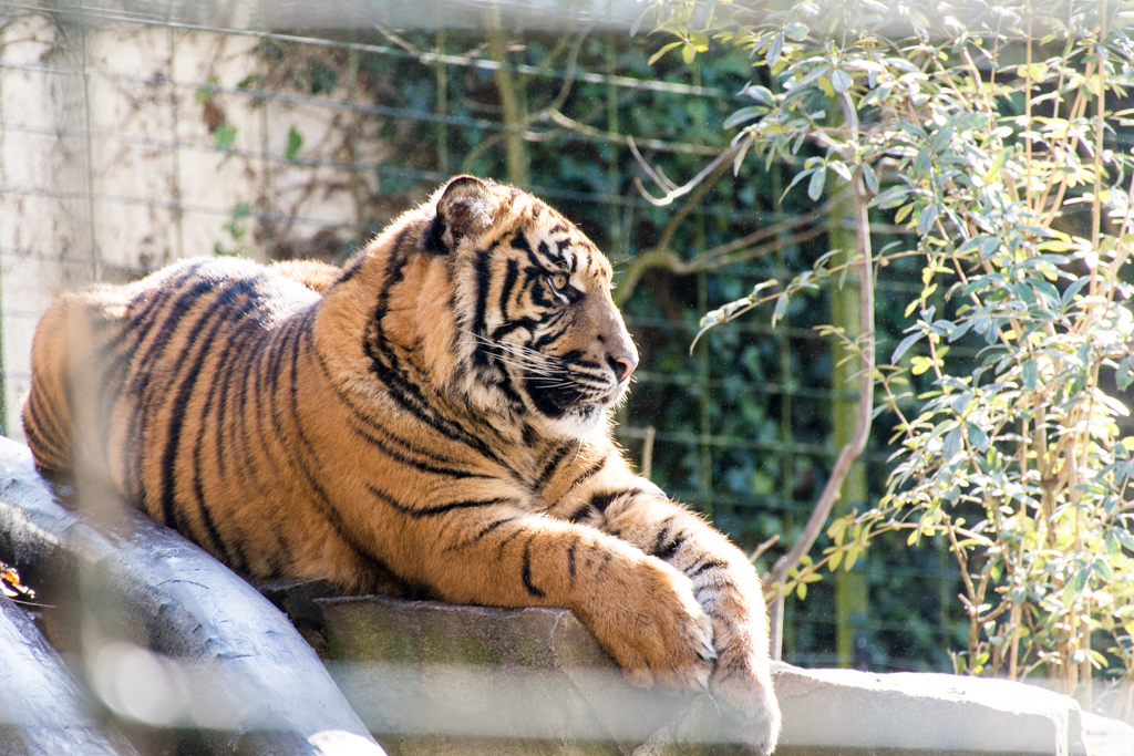 zoo beauval_5